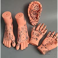 WellieSTR 1 pair hand (15cm)+1 pair foot (2012cm)+ear (16cm) model massage Massage acupuncture points moxibustion
