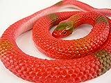 いたずらグッズ  へび 蛇 ヘビ とぐろへび 赤 おもちゃ  ゴム製
