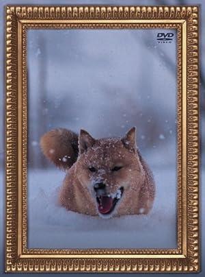 レオナルド犬プリオ(通常盤) [DVD]