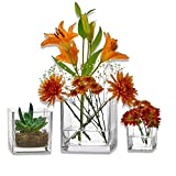 PARNOO Set of 3 Glass Square Vases 4, 5, 6 Inch – Clear Cube Shape Flower Vase, Candle Holders - Perfect as a Wedding Centerpieces, Home Decoration