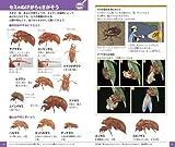 昆虫 (小学館の図鑑 NEOポケット) 画像