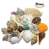【エデンの貝殻】海の贈り物 ワクワク いろんな大きな貝殻 スペシャル 詰め合わせ どっさり 約460g 25個セット [S-13]
