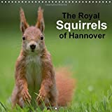 The Royal Squirrels of Hannover 2018: Red Squirrels in the Royal Gardens of Herrenhausen (Hannover) (Calvendo Animals)