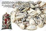 【北海道オホーツク海サロマ湖産 牡蠣生むき身 生食 1年牡蠣 500g約60粒・1kg約120粒】日本テレビ『ザ!鉄腕!DASH!!2013年2月放映』でも取り上げられた北海道サロマ湖産の生むき身牡蠣。サロマ湖の牡蠣は流氷がもたらす豊富なミネラルをたっぷり取り込んでおり甘く濃厚でとってもクリーミー。鮮度そのまま産地直送で発送します。 (牡蠣むき身 1kg)