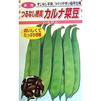 つるありいんげん 種 【 カルナ菜豆 】 種子 小袋(約30ml)