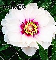 10本の牡丹の植物の牡丹の花の盆栽の植物中国の家庭のための美しい盆栽の花の鉢植えのバラ:4
