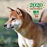 2020年 大判カレンダー 柴犬