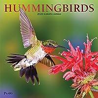 Hummingbirds 2020 Calendar: Foil Stamped Cover