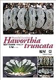 魅惑の多肉植物 ハオルシア 玉扇(ぎょくせん) Haworthia truncata