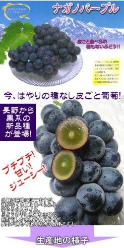 長野の新品種ぶどう 皮ごと種なし 黒ぶどう ナガノパープル 1kg 2~3房 ご予約