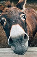 Say Hello to the Donkey Journal: 150 Page Lined Notebook/Diary