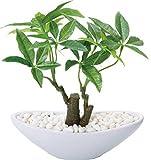 ポピー 観葉植物の造花 パキラポット S