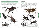 日本の昆虫1400 (2) トンボ・コウチュウ・ハチ (ポケット図鑑) 画像