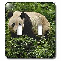 3dRose LLC lsp_70198_2 ジャイアントパンダベア、ウロンチャイナ保護、中国-As07 Pox0331 ピートオックスフォードダブルトグルスイッチ