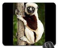マウスパッド–Lemur CoquerelのSifaka Sifakaマダガスカル