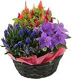 季節の3種寄せバスケット 鉢植え プレゼント フラワーギフト 花のギフト社(Hana No Gift Sha) 花のギフト社