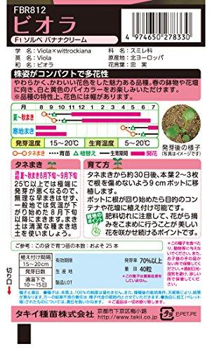 タキイ種苗 ビオラF1 ソルベバナナクリーム