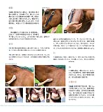 馬のためのグルーミング完全ガイド−WORLD-CLASS GROOMING for Horses− 画像