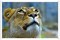 ライオンフェイスルックアップ26319のティンサイン 金属看板 ポスター / Tin Sign Metal Poster of Lioness Face Look Up 26319
