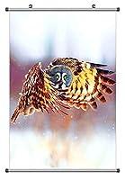 美しいフクロウ 動物の写真ポスター掛け軸(70cmx105cm)