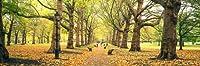 壁360ピール&スティック壁壁画: Trees Along A Footpath In Green Park London 60 in x 20 in 101608_912