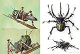 機械昆蟲制作のすべて 進化し続けるメカニカルミュータントたち 画像