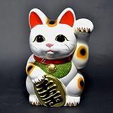 招き猫 6号 白小判猫(左手) 常滑焼