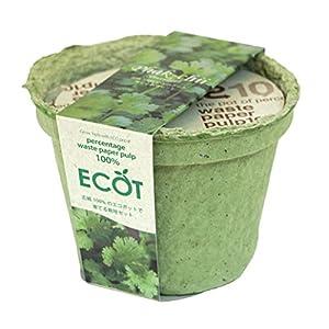 エコットS パクチー(コリアンダー)の関連商品3