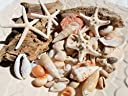 天然素材 流木とヒトデ2Pコブヒトデ2P貝殻セット ハワイアンインテリア 工作/手作り素材 ディスプレイ
