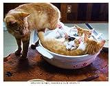 ねこ鍋―みちのく猫ものがたり 画像