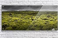 アクリルFineアート壁装飾36x 16Islandmoos I by Franz Schumacher