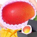 ぐるめライン 宮崎県産完熟マンゴー 1個 3?4Lサイズ