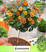 赤 - ポット適切ハーティ種子種子キッチンガーデン種子パックシード(パケット当たり10)INGのSEED種子