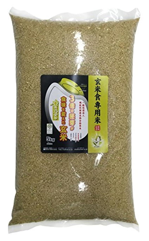 松の木可能にする援助する玄米食用 PREMIUM 玄米 金のいぶき 5kg 平成30年産