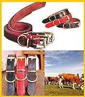 大型犬 中型犬 小型犬 用 サイズも色も選べる 牛革 おしゃれで かわいい 首輪 (M(2㎝), ダークブラウン)