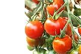 完熟収穫ミニトマト小鈴1.3kg