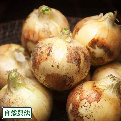 新玉ねぎ 約10kg(沖縄県 大宜味農場)沖縄県無農薬野菜