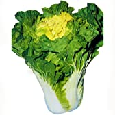 白菜 種 【 花芯白菜 】 種子 小袋(約8ml)