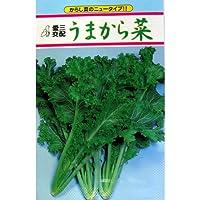 葉菜類 種 葉菜類うまから菜 小袋(約5ml)