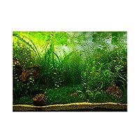 gazechimp 魚のタンクの壁装飾ステッカー 水族館 水槽 背景 ポスター 3D HD画像 ステッカー - 水草, XL