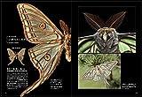 世界の美しい蛾 画像