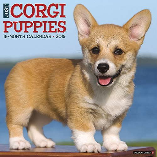 Just Corgi Puppies 2019 Calendar