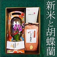 『新米とマイクロ胡蝶蘭』花鉢 送料無料 ミディ胡蝶蘭 母の日人気当店1位