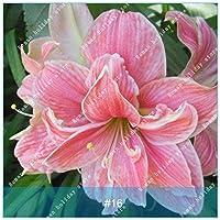 有機種子だけでなく、植物:6:フェリーでアマリリス、rdosリリー、アマリリス、ピンクAmarylliss第16位