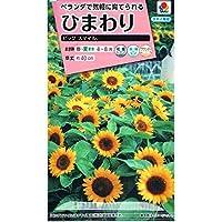 【種子】ひまわり ビッグスマイル 2.5ml