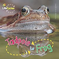 Lifecycles: Tadpole to Frog (Qed Lifecycles)