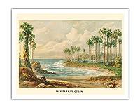 パルミラのヤシの木(トディの手のひら) - スリランカ(セイロン) - ビンテージな植物のイラスト によって作成された エルンスト・ヘイン c.1889 - アートポスター - 51cm x 66cm