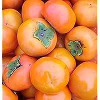 もりもとや 和歌山県産 富有柿 (訳有り・ご家庭用) 5kg