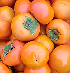 和歌山県産 富有柿 5キロ(訳有り・ご家庭用)