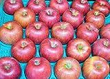 長野県産 生産農家直送 訳ありりんご 「ポケットサイズのシナノスイート」 ご家庭向き 20~25玉 約5kg入り/箱